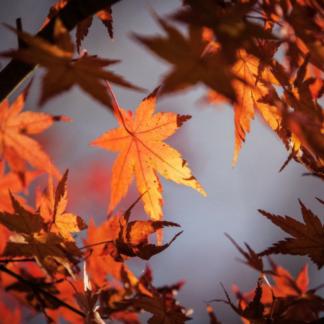 Sélection d'automne